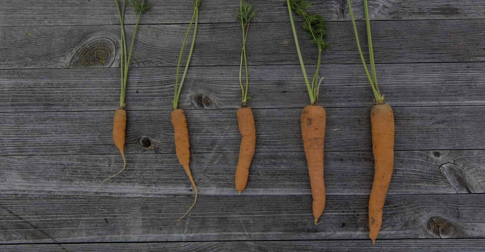 Автоворонка, Carrot Quest