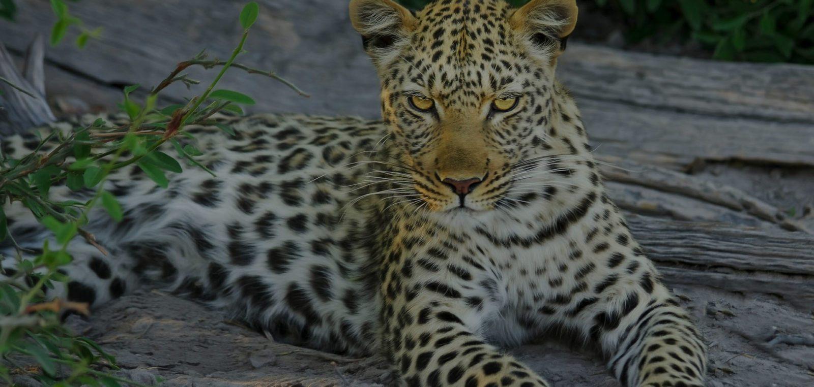 Лучшие расширения для Safari